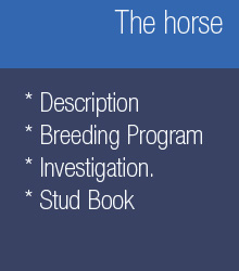 The horse, description, breeding program, research and stud book